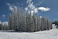 Aspen Mountain firs with fresh snow no gondola.jpg