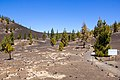 At Teide National Park 2019 046.jpg