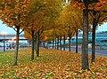 Autumn evening, Belfast - geograph.org.uk - 1035938.jpg