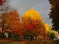 Autumn in Madison - panoramio (17).jpg