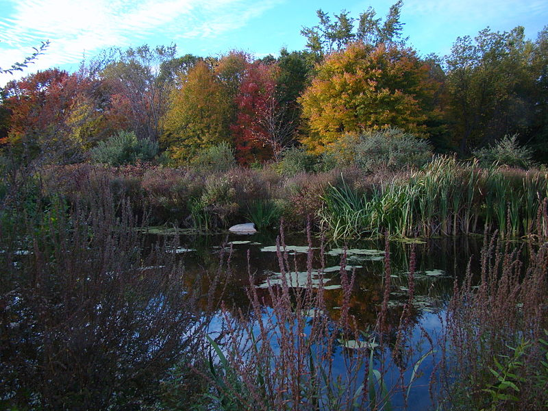 File:Autumn in New England.jpg