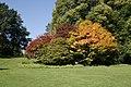 Autumn in the Arboretum at Batsford - geograph.org.uk - 1525819.jpg