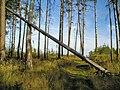 Avtozavodskiy rayon, Tolyatti, Samarskaya oblast' Russia - panoramio.jpg