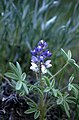 Badlands Flowers- Red, Pink, Blue (4a05bcc8-35d8-4587-bcc4-6da0e59be66a).jpg