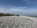 Baie Somme Hourdel - Cayeux-sur-Mer (FR80) - 2021-05-29 - 19.jpg
