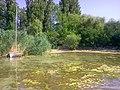Balatonlelle, 8638 Hungary - panoramio (72).jpg