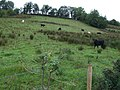 Ballygowan Townland - geograph.org.uk - 946960.jpg
