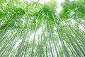 Bamboo Grove (215912603).jpeg