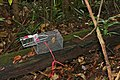 Banana baited Trap, set by students for mammals sampling of the park ... (23632394520).jpg