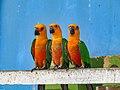 Bangabandhu Sheikh Mujib Safari Park 27.jpg
