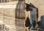 Bangkok Thailand Stray-cat-in-Wat-Hua-Lamphong-01.jpg