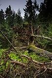 Bannwald Wettenberger Ried in Oberschwaben AW05.jpg