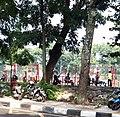 Barstard in Bandung.jpg