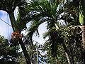 Bathsheba, Barbados 03.jpg