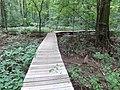 Battle Creek Cypress Swamp 24.jpg