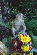 Batu caves monkey.jpg