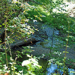 Bear Creek (San Francisquito Creek) - Bear Creek coming down from top of photo to join with Corte Madera Creek at bottom of photo, forming San Francisquito Creek. July 2011.