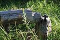 Beaver sign on Meeks Creek Aug 2010.jpg