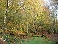 Beech trees in Ness Wood - geograph.org.uk - 610473.jpg