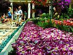 Bellagio Conservatory - 2012 Spring Celebration (7156303820).jpg