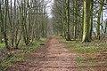 Bellmount Plantation - geograph.org.uk - 362368.jpg