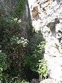 Bellmunt del Priorat, Tarragona, Spain - panoramio (2).jpg