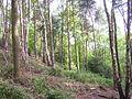 Belmont Wood, Yeadon - geograph.org.uk - 11861.jpg