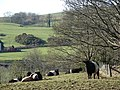 Belties at Old Bridge of Urr - geograph.org.uk - 687455.jpg