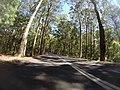 Benandarah NSW 2536, Australia - panoramio (14).jpg