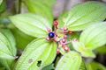 Berries (207078730).jpg