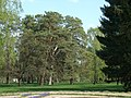 Bila Tserkva, Kyivs'ka oblast, Ukraine - panoramio (70).jpg