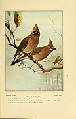 Bird-life; a guide to the study of our common birds (1898) (14569110098).jpg