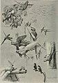 Bird-lore (1914) (14568734620).jpg