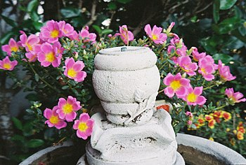 English: A fountain on a bird bath, with flowers.