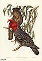 Bird illustration by Elizabeth Gould for Birds of Australia, digitally enhanced from rawpixel's own facsimile book355.jpg