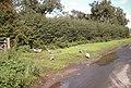 Birds at Newstead Grange Farm - geograph.org.uk - 223225.jpg