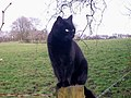 Black Cat for Luck - Mountain Park, Llanteg - geograph.org.uk - 1173165.jpg