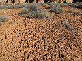 Blackbrush habitat - Flickr - brewbooks (1).jpg