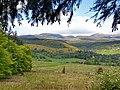 Blackmuir Wood - panoramio (5).jpg