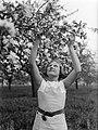 Bloeiende fruitboom in de Betuwe met Van der Polls stiefdochter Hans, Bestanddeelnr 189-1400.jpg