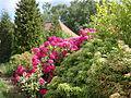 Blomstrende busk i haven bag herregården på Frilandsmuseet.JPG