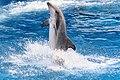 Blue Horizons (Dolphin Stadium) (8783448529).jpg