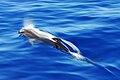 Bluewater Cruising.jpg
