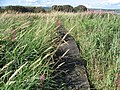Boardwalk, Kilbirnie Loch - geograph.org.uk - 521797.jpg