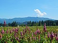 Boise Ridge near Enumclaw, Washington 2.jpg