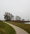 Bomengroep aan fietspad om Langweerderwielen (Langwarder Wielen). Oostkant 01.jpg