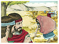 Book of Ruth Chapter 2-8 (Bible Illustrations by Sweet Media).jpg