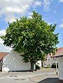 Borchen-Etteln-Naturdenkmal Kirchstr. 21 (1).jpg