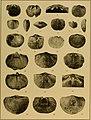Brachiopod genera of the suborders Orthoidea and Pentameroidea (1932) (20219422730).jpg