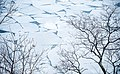 Branches and Ice, Leif Erikson Park, Duluth 3 12 18 -lakesuperior -winter (40093460824).jpg